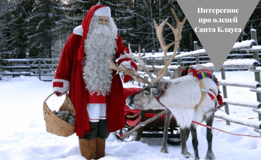 письмо Санта Клаусу на английском 100